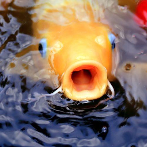 fish-1059268_960_720