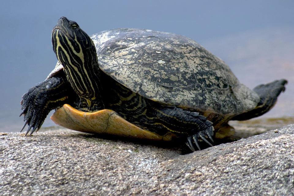 Comment faire un étang pour tortue?